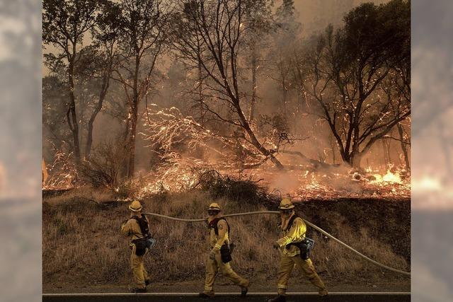 Waldbrände an der Westküste Kanadas und der USA breiten sich aus