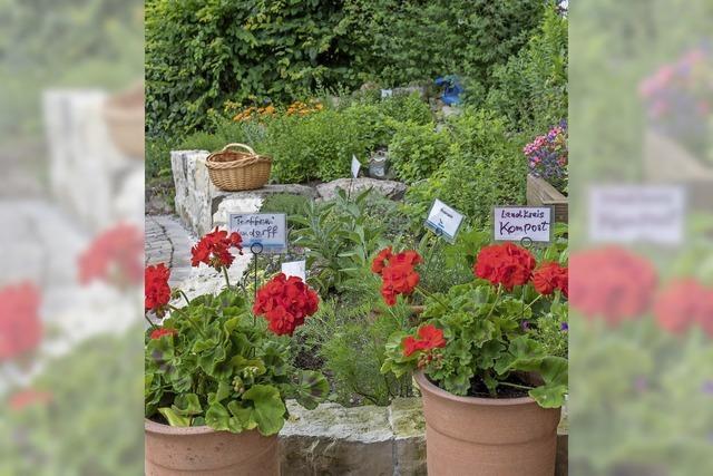 Garten rückt in den Fokus