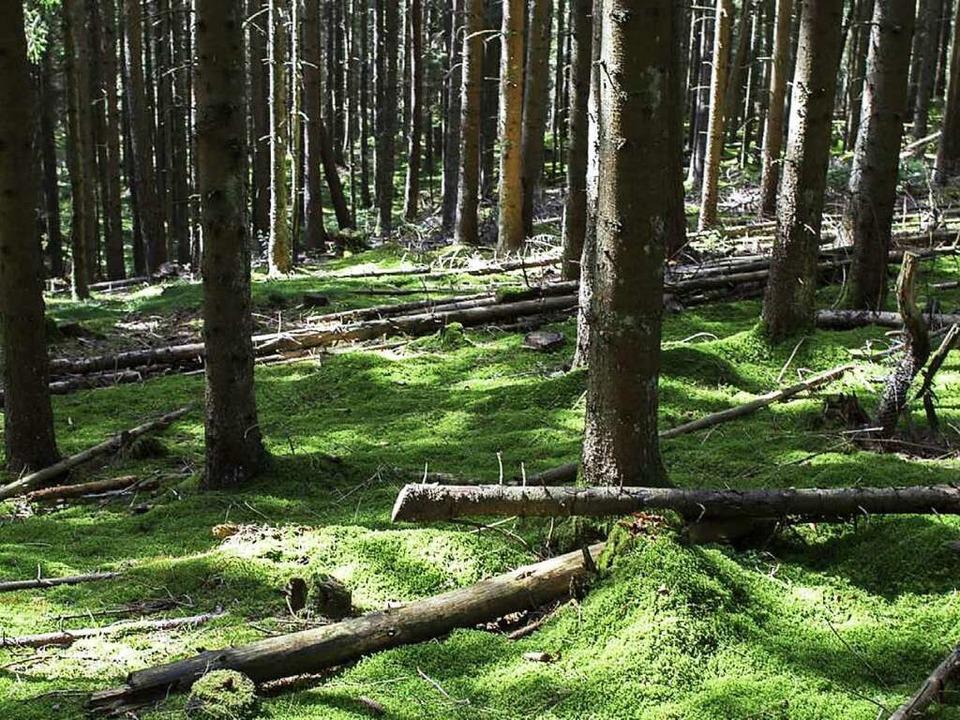Zur Ruhe finden: Schon nach kurzer Zeit schlägt das Herz im Wald langsamer  | Foto: Joss Andres/Kistler