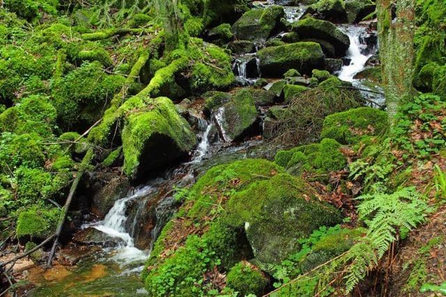 Baumgewirr, Bergwasser und Bannwald