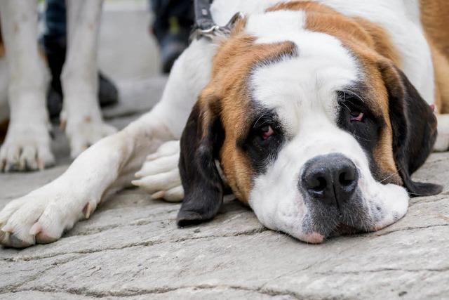 Hund will 5-Jährige beschützen und beißt Bettlerin in Karsau
