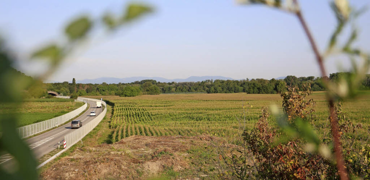 Auf einer Fläche von gut zwölf Hektar ...ie für unbelasteten Erdaushub geplant.  | Foto: Martin Wendel