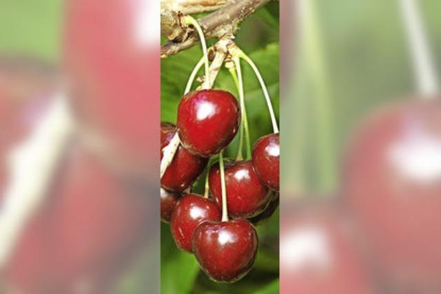 Der Obstgarten feiert 60. Geburtstag