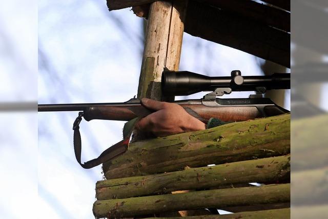 Die stärkere Jagd auf Rehe und Schwarzwild bewährt sich
