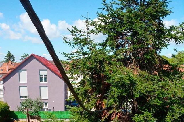 Maroder Strommast stürzt in Garten – Leitung hängt in Tanne