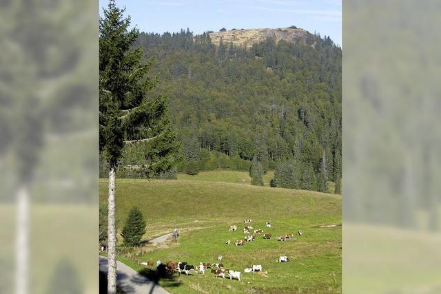 Bernau plant einen Gemeinschaftsstall