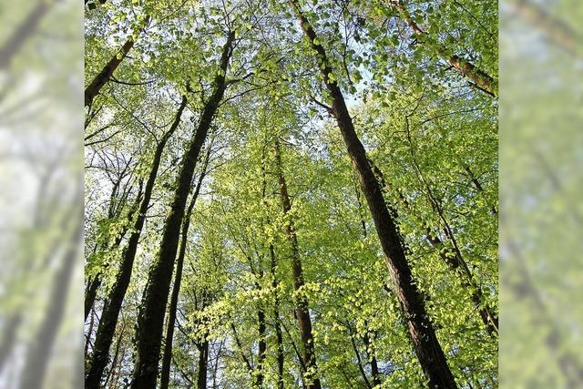 Neue Organisation für den Wald