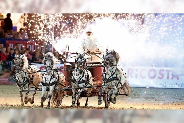 Viel los beim Fest der Pferde