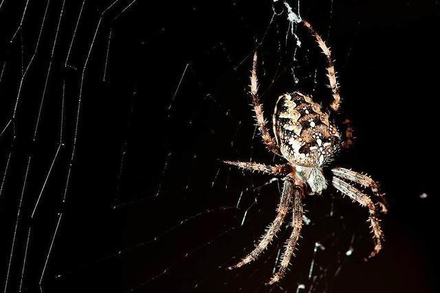 Spinne in Lörrach löst Polizeieinsatz aus