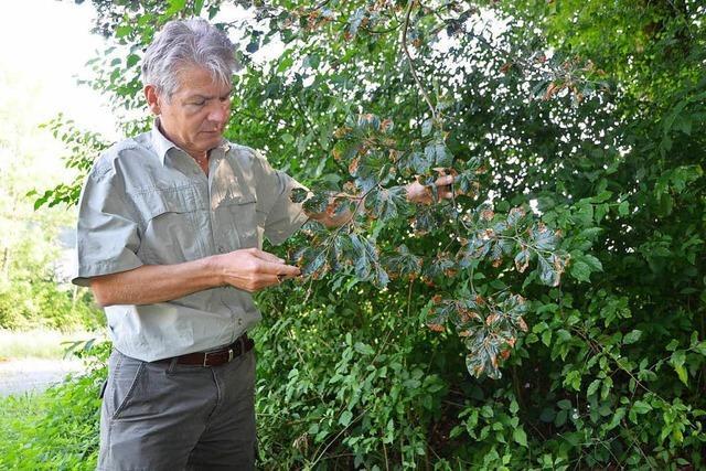 Über 50 Publikationen zur Waldwirtschaft tragen seine Handschrift