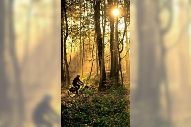 Fahrplan für den Sulzburger Wald