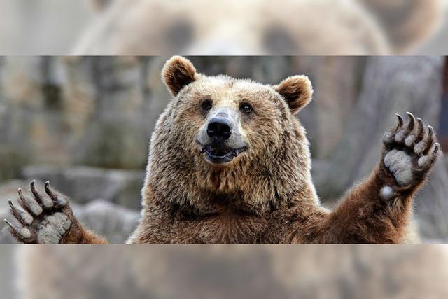 Braunbär besucht italienischeFamilie im Nationalpark Abruzzen