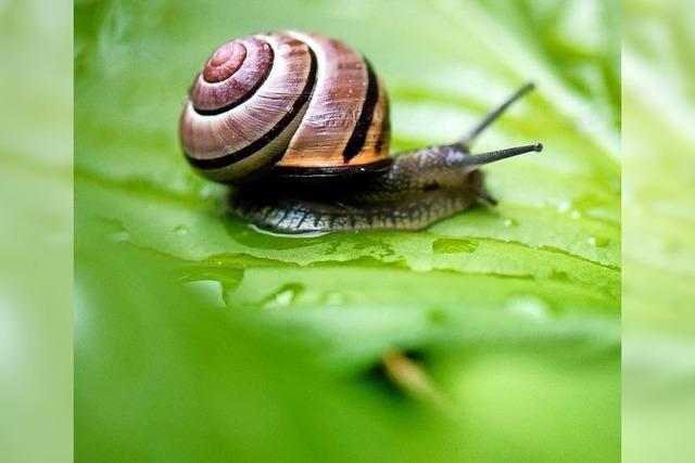 Der Landkreis Lörrach gibt mehr Geld für Naturschutz aus