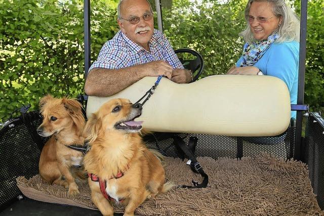 Ein Fest hilft Hunden