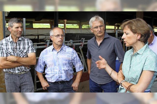 Kühe, Weiden, Schlachtprobleme