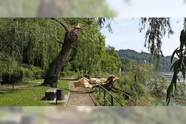Bäume knicken um wie Streichhölzer