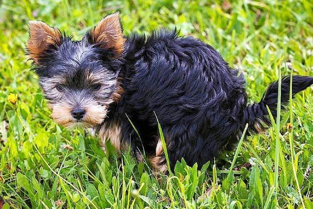 In Offenburg gibt es immer mehr Hunde – und damit auch mehr Hundekot