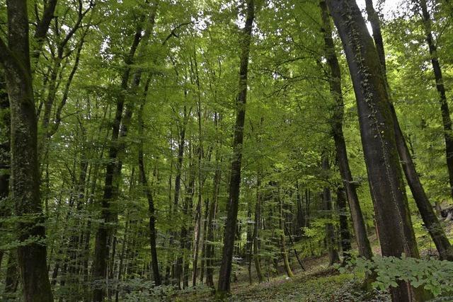 BZ-Leser erkunden den heimischen Wald