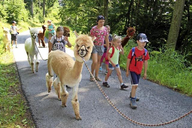 Mit Alpakas an der Leine unterwegs