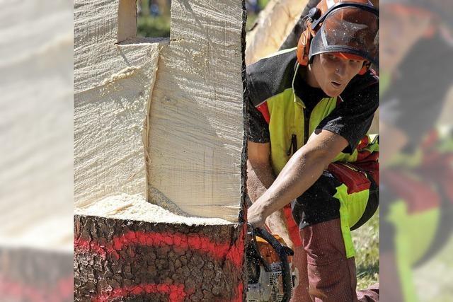 Holzfäller treten wieder an
