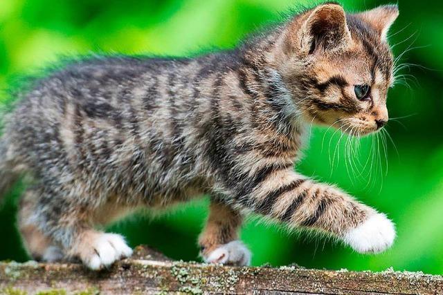 Die zehn besten Katzen-Videos zum Weltkatzentag