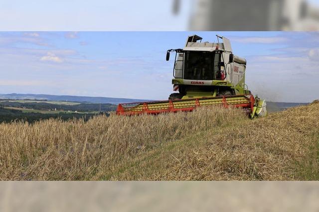 Landwirte rechnen mit zufriedenstellenden Erträgen