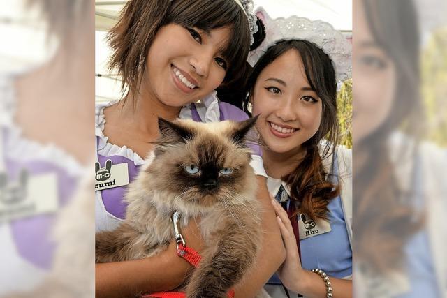 In Japan gibt es über 150 Katzencafés – etwa das Temari-Haus in Tokio
