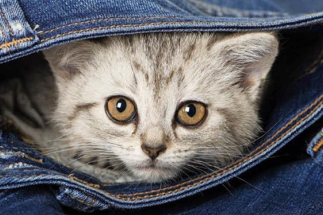 Heute ist Weltkatzentag