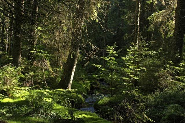 Zauberwaldpfad im Naturschutzgebiet Taubenmoos bei Bernau