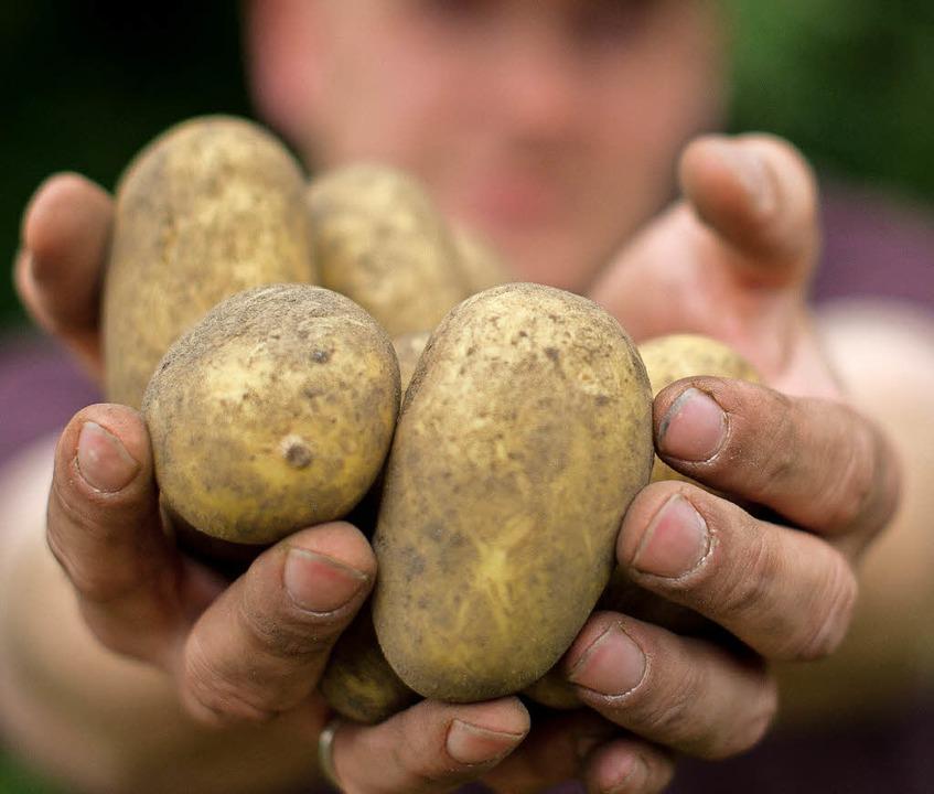 Vielfalt rund um die Kartoffel, Forchh...rdepfl-Dorffest am Wochenende Trumpf.   | Foto: dpa