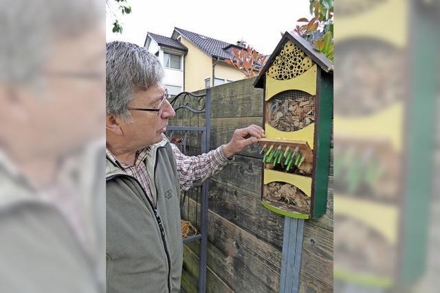 Wildbienen haben keine starke Lobby