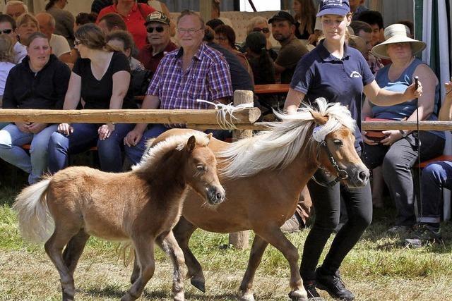 Ein Fest für jeden Pferdefreund