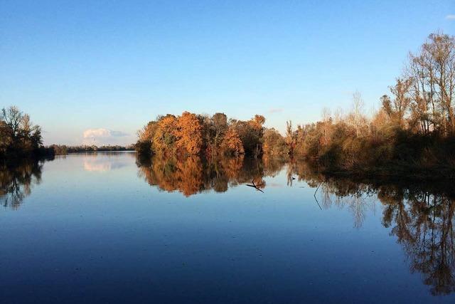 Naturschutzwart im Taubergießen fühlt sich vom Landratsamt im Stich gelassen