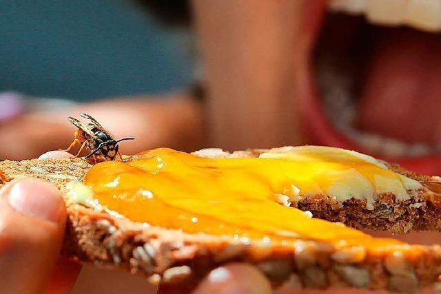 Expertenrat: Im Umgang mit Wespen sollte man gelassen bleiben