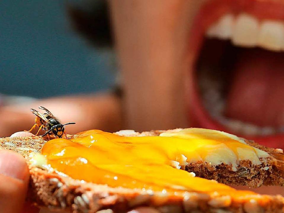 Mitesser: Wer draußen vespert, muss sich vor Wespen in Acht nehmen.  | Foto: dpa