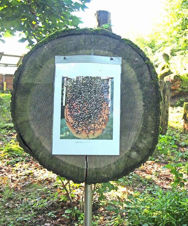 Auf selbstgefertigten Tafeln und mit V...ressierten das Leben der Bienen näher.    Foto: Gabriele Poppen