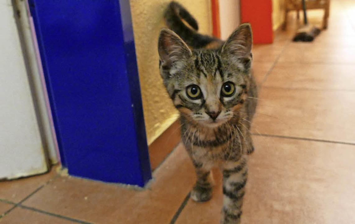 Eine Babykatze im Pensionsraum des Tierheims   | Foto: Joy Jakob
