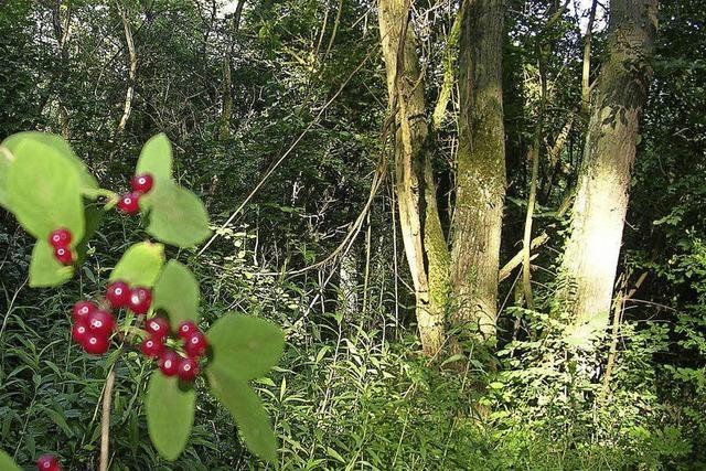 Ein Wald für viele Zwecke