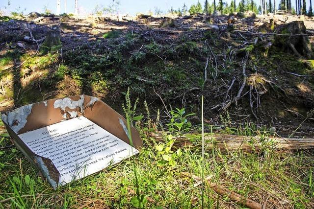 Zerstörungen am alten Endenburger Waldlehrpfad