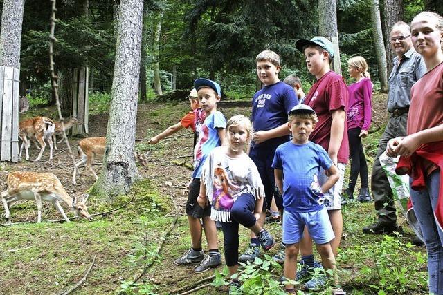 Langenaus Kinder besuchen das Damwild