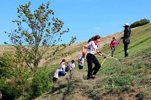 Studierende aus aller Welt arbeiten am Kaiserstuhl für den Naturschutz