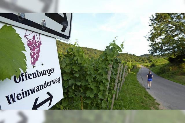 Wandern, Wein und Weitblick