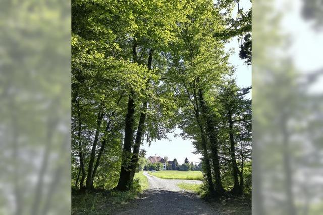 Im Bestattungswald in Neuried findet man die letzte Ruhe zu Füßen der Bäume