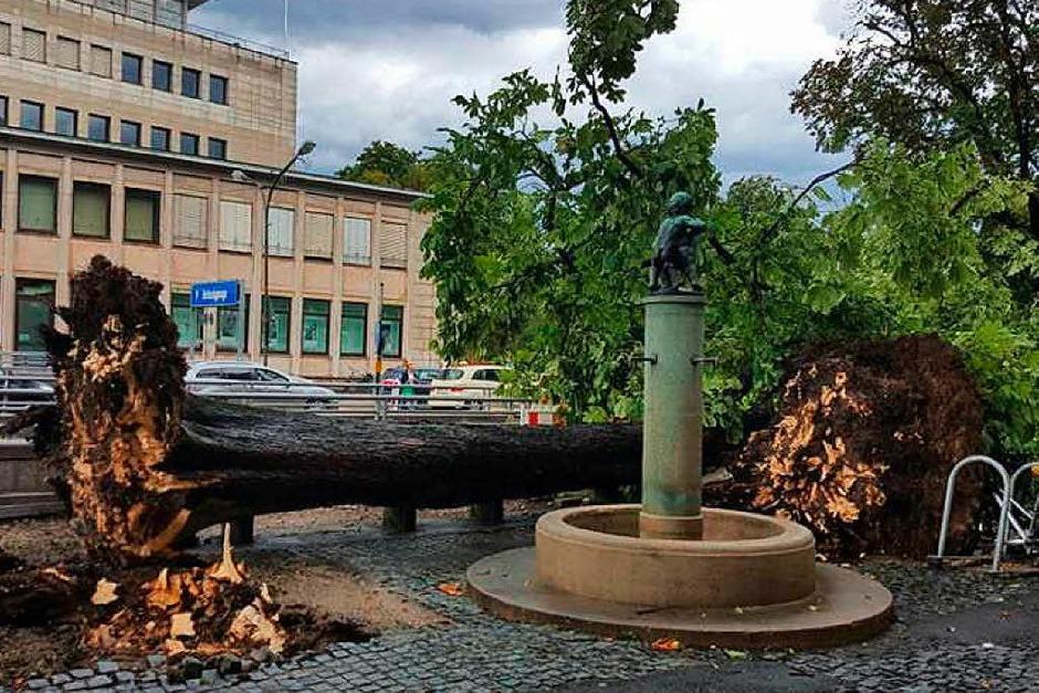 Auch vor dem C&A-Gebäude in der Innenstadt ist ein Baum umgefallen. (Foto: Sebastian Heusel)