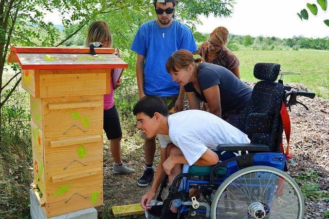 Rheinfelder Schüler sind Bienenpaten
