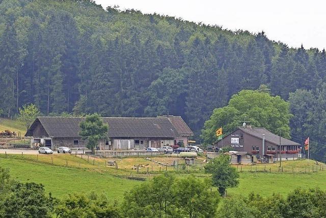 170 Rinder genießen Sommerfrische auf der Alp