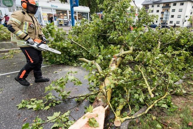 Ausmaß der Baumschäden nach dem Unwetter ist noch unklar