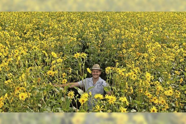 Silphie statt Mais lohnt sich vielfältig