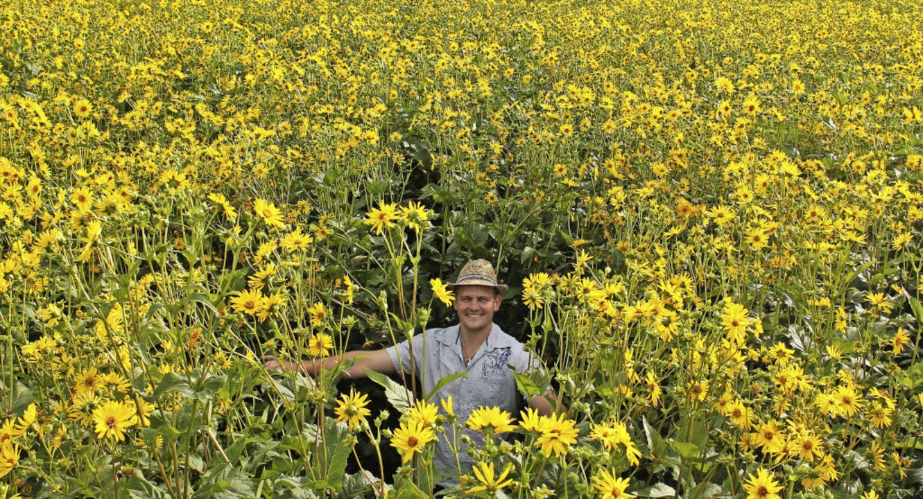 Auf zwei Hektar Fläche hat Philipp Ewa...pflanzt und ist sehr zufrieden damit.     Foto: Lutz Rademacher
