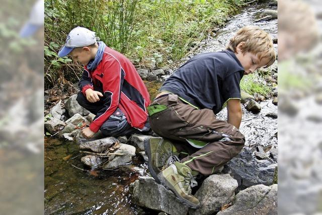 Kinder erforschen das Leben in Bächen
